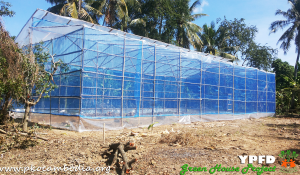 Greenhouse-07-Dec-2015-01