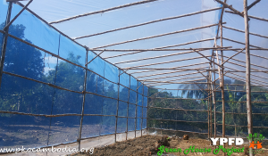 Greenhouse-07-Dec-2015-02