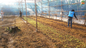 greenhouse-fertilizer-01